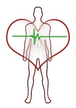 Herz-Kreislaufsystem mit Liegeergometer trainieren