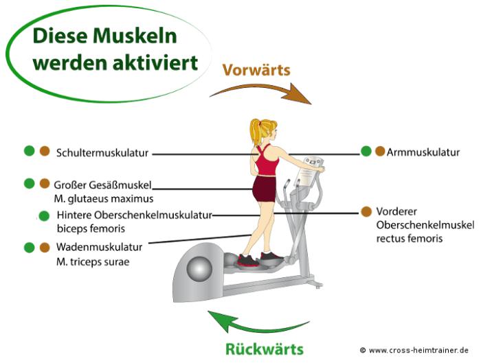 Welche Muskeln werden mit dem Crosstrainer trainiert? - Vorwärts vs. Rückwärts